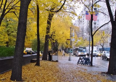 Fifth Ave Fall