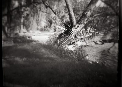 Wisconsin Tree
